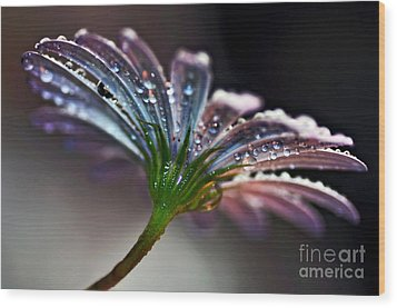 Daisy Abstract With Droplets Wood Print by Kaye Menner