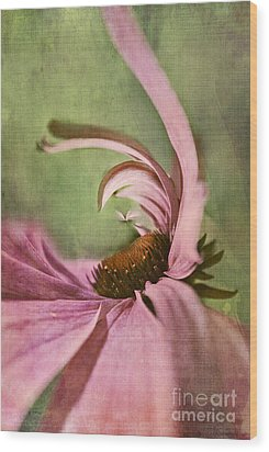 Daisy Fun - A01v04b2t05 Wood Print by Variance Collections