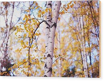 Dancing Birches Wood Print by Jenny Rainbow