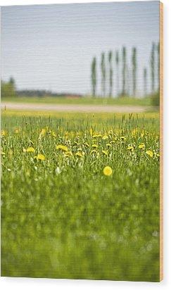 Dandelions Growing In Meadow Wood Print by Stock4b-rf
