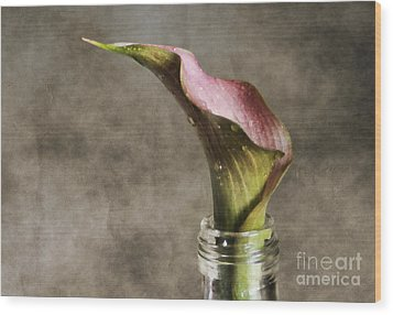 Dew Of A Lily Wood Print by Darren Fisher