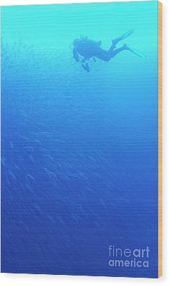 Diver By School Of Pelican Barracudas Wood Print by Sami Sarkis