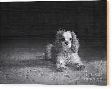 Dog Black And White Wood Print by Jane Rix