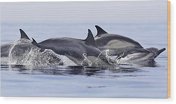 Dolphins At Play Wood Print by Steve Munch