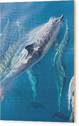 Dolphins Life Wood Print by Steve Munch