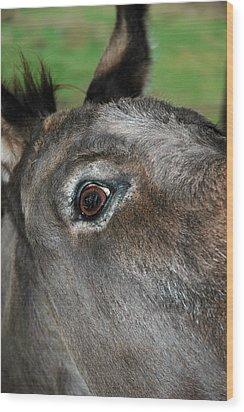Donkey Stink Eye Wood Print by LeeAnn McLaneGoetz McLaneGoetzStudioLLCcom