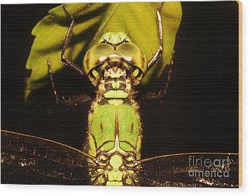 Dragonfly Closeup Wood Print by Lynda Dawson-Youngclaus
