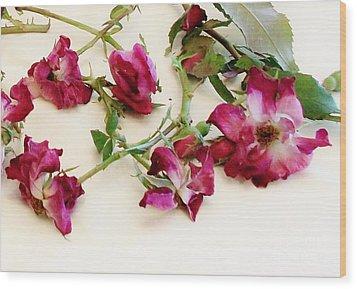 Dried Beauty Roses Wood Print by Marsha Heiken