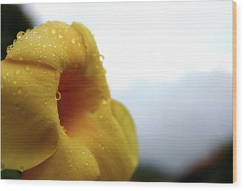 Droplets Wood Print by Frederico Borges