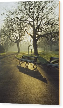 Dublin - Parks, St. Stephens Green Wood Print by The Irish Image Collection
