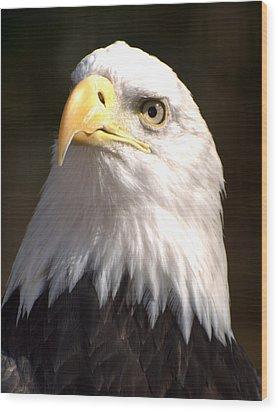 Eagle Eye Wood Print by Marty Koch