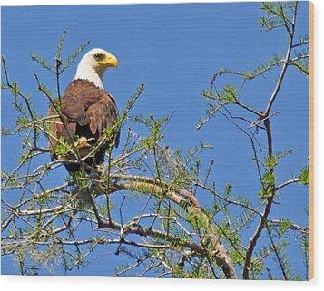 Eagle On Watch Wood Print by Kathy Ricca