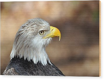 Eagle Right Wood Print by Marty Koch