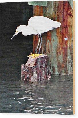 Egret Fishing Wood Print by John Collins
