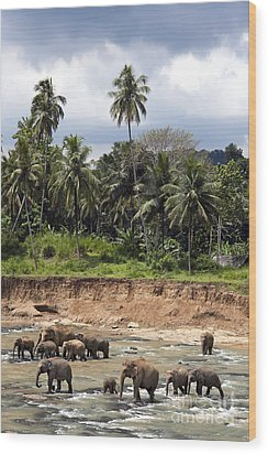 Elephants In The River Wood Print by Jane Rix