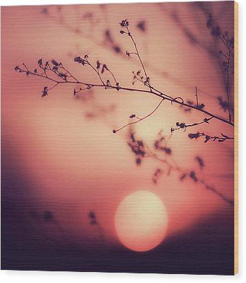 Evening Delight Wood Print by Jack Wassell Photography