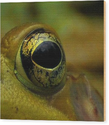 Eye Of Frog Wood Print by Paul Ward