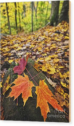 Fall Leaves In Forest Wood Print by Elena Elisseeva