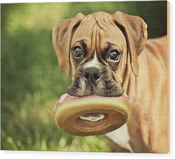 Fawn Boxer Puppy Wood Print by Jody Trappe Photography