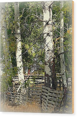 Fenced Aspen Wood Print by Cindy Wright