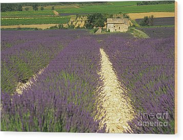 Field Of Lavender. Drome Wood Print by Bernard Jaubert