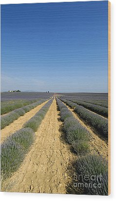 Field Of Lavender. Valensole Wood Print by Bernard Jaubert