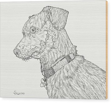 Finn In Black And White Wood Print by Salvadore Delvisco