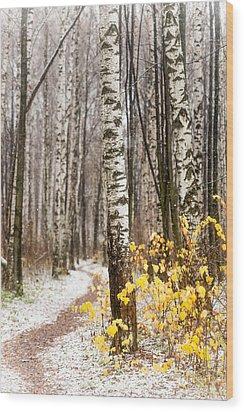 First Snow. Hidden Path Wood Print by Jenny Rainbow