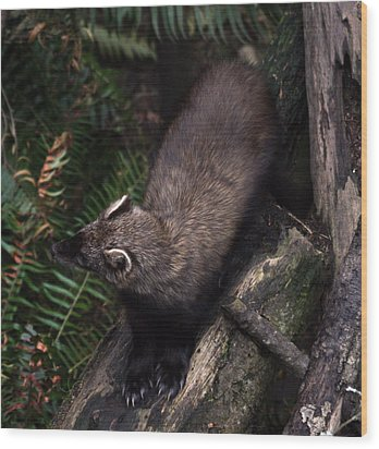 Fisher - 0005 Wood Print by S and S Photo