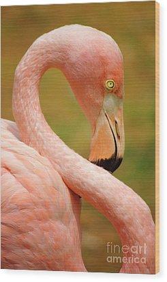 Flamingo Wood Print by Carlos Caetano