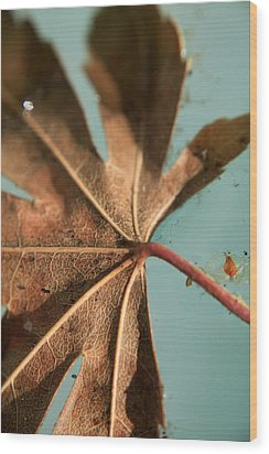 Floating And Drifting Wood Print by Laurie Search