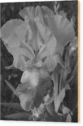 Flower 46 Wood Print by Todd Sherlock