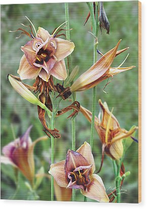 Flower Sprite Wood Print by Bill Fleming