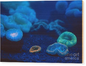 Fluorescent Corals Wood Print by Kjell B Sandved and Photo Researchers