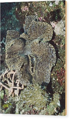Fluted Giant Clam Wood Print by Georgette Douwma