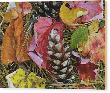 Forest Floor Portrait Wood Print by Rich Franco