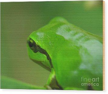 Frog Wood Print by Odon Czintos