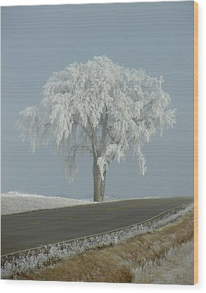 Frost On The Big Tree  Wood Print by Penny Meyers