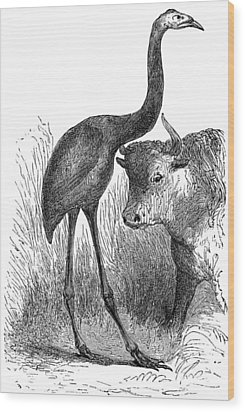 Giant Moa And Prehistoric Cow, Artwork Wood Print by