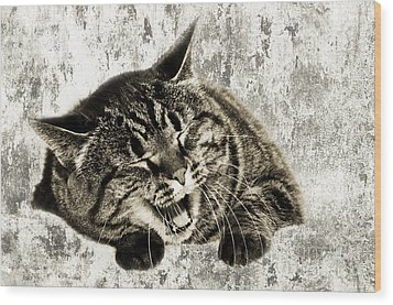Giggle Kitty  Wood Print by Andee Design