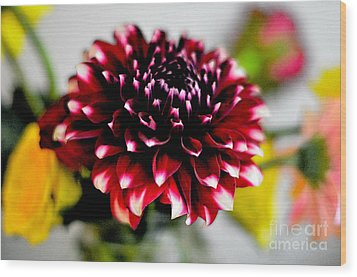 Glowing Dahlia Wood Print by Pravine Chester