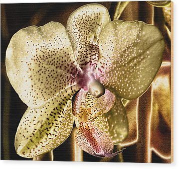 Golden Orchid Wood Print by Barbara Middleton