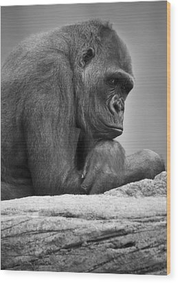 Gorilla Portrait Wood Print by Darren Greenwood