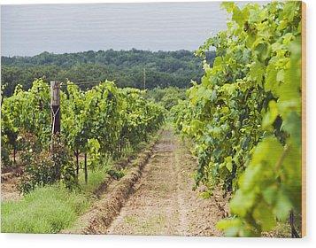 Grape Vines At Fall Creek Vineyards Wood Print by James Forte
