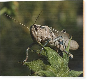 Grasshopper 2 Wood Print by Ernie Echols