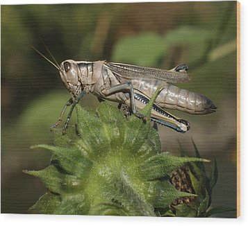 Grasshopper Wood Print by Ernie Echols