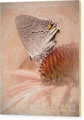 Gray Hairstreak Butterfly Wood Print by Betty LaRue