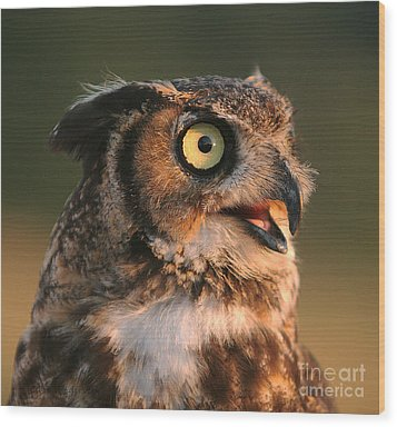 Great Horned Owl Wood Print by Clare VanderVeen