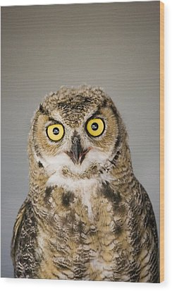 Great Horned Owl Wood Print by Henry Georgi Photography Inc