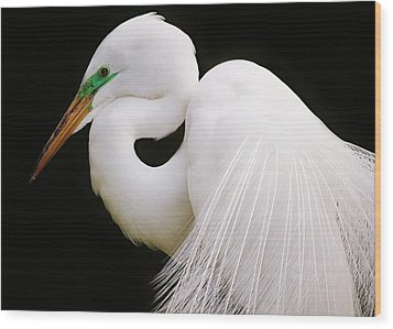 Great White Egret In Breeding Plumage Wood Print by Paulette Thomas